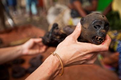 Bushmeat au marché local au Congo. (Photo: IRSNB)
