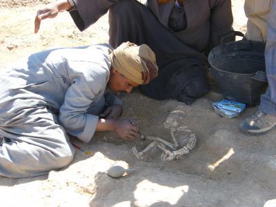 Een jonge baviaan wordt uitgegraven. Hij heeft een breuk in de linkervoorarm. (Foto: Hierakonpolis Expedition)
