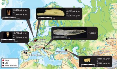 Onderzoekers van het Max Planck Instituut in Leipzig hebben het kern-DNA van vijf 'late' neanderthalers gereconstrueerd. Twee ervan zijn 'Belgisch'. (Foto: Max Planck Instituut)