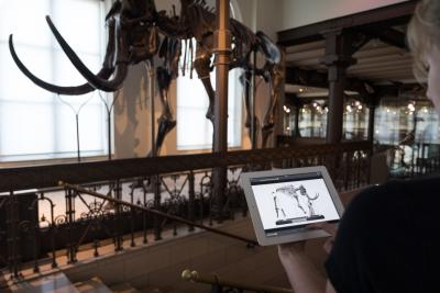 A visitor is watching a video about our mammoth (photo: Thierry Hubin, RBINS)