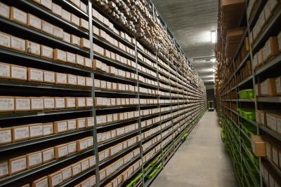 Difficile de déplacer ces longues et lourdes boîtes de carottes de sondage : les plus lourdes peuvent atteindre les 42 kilos ! (photo : IRSNB)