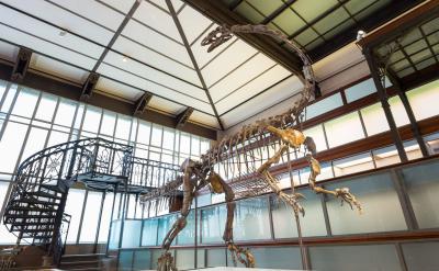 Ben le platéosaure dans la Galerie des Dinosaures