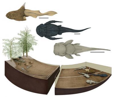 Reconstruction de la frayère : de jeunes placodermes dans les eaux peu profondes (en haut) et des adultes dans les eaux plus profondes (en bas) (Image : Justine Jacquot-Hameon, MNHN)