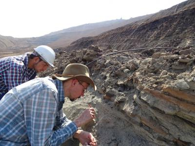 Opgravingen in de bruinkoolmijn van Tadkeshwar, in het westen van India (Foto: Annelise Folie, KBIN)