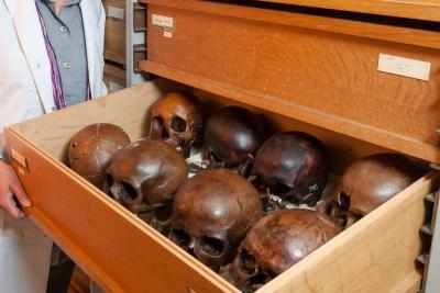 Collection de crânes provenant d'un cimetière médiéval à l'abbaye des Dunes à Coxyde. (Photo : IRSNB)