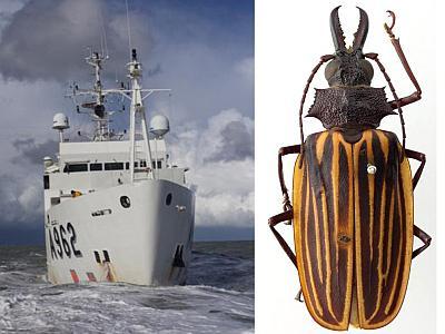 Het onderzoeksschip Belgica en het insect Macrodontia batesi Lameere 1912 (foto's: KBIN)