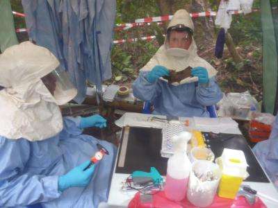 Taking blood and tissue samples of bats in the biosafe field lab in Kagbono (North of DRC), where an Ebola outbreak occured May 2017. (Photo: University of Antwerp)