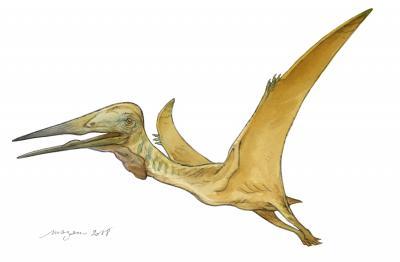 Artistieke impressie van de pterosauriër Mistralazhdarcho maggii (Afbeelding: Pierre Lavaud, Mazan)