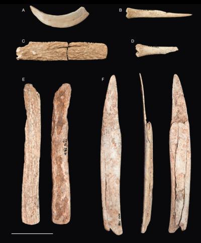 Os d'animaux provenant de la sépulture néolithique de l'Arbri des Autours. B : un poinçon fabriqué à partir d'un métatarse de mouton ou de chèvre. C, E : deux baguettes en bois de cerf. F : deux côtes appointées provenant d'un grand bovidé (probablement u