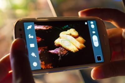 Smartphone - Vipère Schlegel - Schlegels groefkopadder