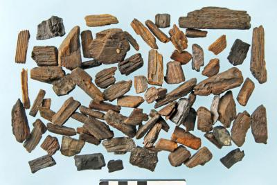 Pieces of wood in the layer of waste at the Emile Braun place in Ghent (Photo: Koen Deforce, RBINS)