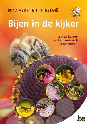 """Cover van de educatieve brochure """"Bijen in de kijker"""""""