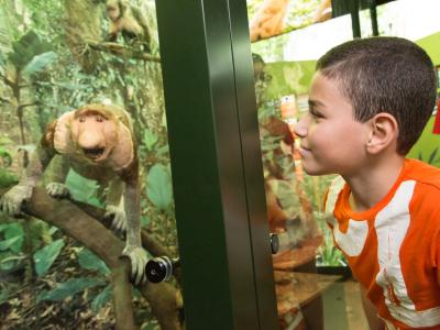 Een jongen kijkt de neusaap in APENSTREKEN (foto: Thierry Hubin, KBIN)