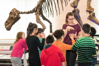 Visite guidée en langue des signes dans la Galerie des Dinosaures (photo :  Thierry Hubin)