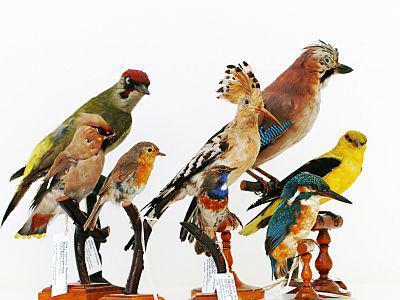 Verschillende vogels uit onze collecties