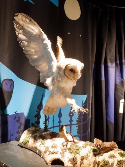 les expos itinérantes du Centre Bruxellois d'éducation à la nature: Veilleurs de nuit