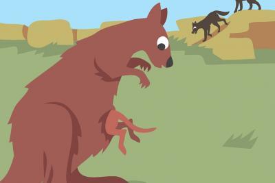 Kangourou sautant dans la poche ventrale de sa maman (illustration : Claude Desmedt, IRSNB)