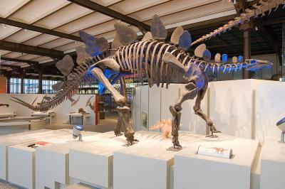 Stegosaurus dans la Galerie des Dinosaures (photo : Thierry hubin, IRSNB)