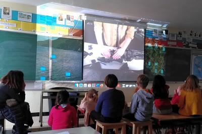 Des élèves assistent depuis leur classe à une animation donnée en ligne et en direct par notre équipe éducative (photo : IRSNB)