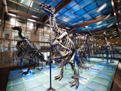 La Galerie des dinosaures