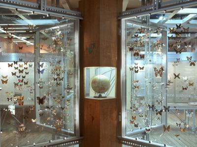 la salle des Insectes
