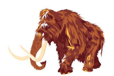 un mammouth (Illustration : Bertrand Panier / IRSNB)