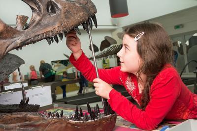 Een bezoeker zet tanden terug op de schedel van een dinosaurus (foto: Thierry Hubin, KBIN)