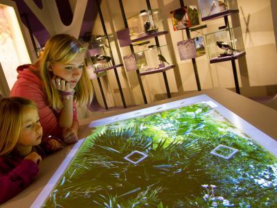 biodiverCity room