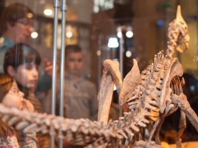 une visite dans la Galerie des Dinosaures