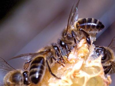Raconte-moi : Le mystère de la ruche jaune