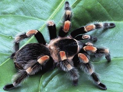 Raconte-moi : l'araignée qui ne perd pas son temps