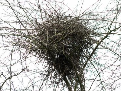 Raconte-moi : Comment les oiseaux ont choisi leur nid