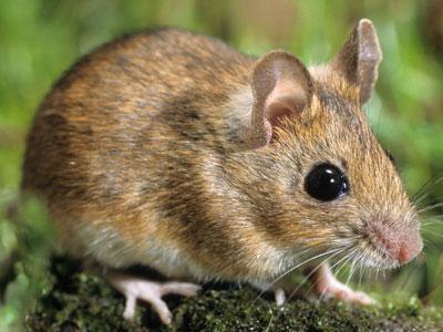 Raconte-moi : La souris philosophe