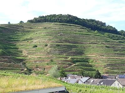 Le Kaiserstuhl, ancienne île-colline, d'origine volcanique, surplombant le Rhin (photo : Jean-Michel Bragard / IRSNB)