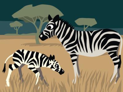 Un zébron et sa mère dans la savane (illustration :  Claude Desmedt / IRSNB)