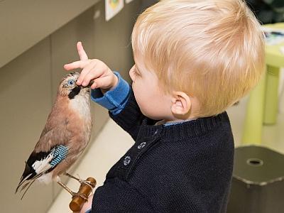 Un très jeune enfant manipule un oiseau naturalisé au cours du Tout-petits atelier sur les oiseaux (photo : Thierry Hubin / IRSNB)