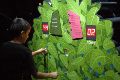 Activité où les visiteurs essayent de cueillir autant de baies que le chimpanzé, sous une lumière déclinante