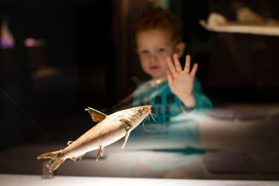 Child looking at an electric fish exhibited in a glass case