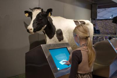 Child discovering the multimedia terminal about the magnetic sense of the cows
