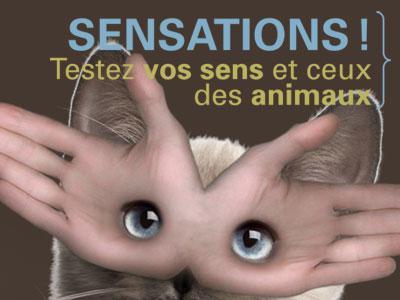 """Visuel de l'expo """"Sensations !"""""""