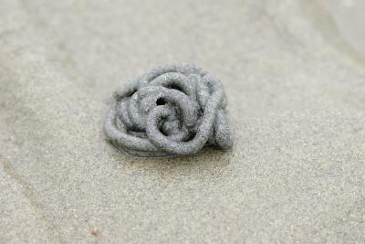 Die kleinen Häufchen, die man oft am Strand findet, sind die Exkremente eines Wattwurms.