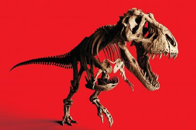 Skelet van Trix, de vrouwelijke T. rex van Naturalis (Leiden)