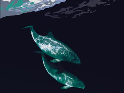 Visual of the exhibition 'Whales & dolphins': drawing of 2 cetaceans in a dark sea