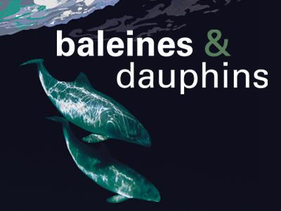 """Visuel de l'expo """"Baleines & dauphins"""": 2 cétacés dessinés dans une mer noire"""