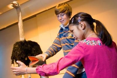 Activiteit over hoe de struisvogel, bij gebrek aan zweetklieren, zijn snavel als koelsysteem gebruikt