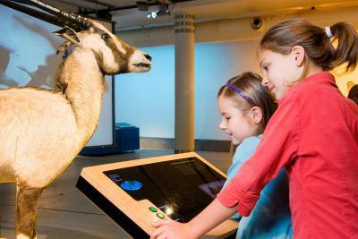 Interactif expliquant comment l'Oryx d'Arabie lutte contre les fortes chaleur en augmentant sa température corporelle à 42 °C