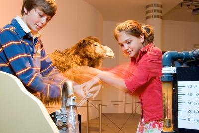 Interactif sur la capacité du chameau à ingurgiter 200 litres d'eau en 3 minutes