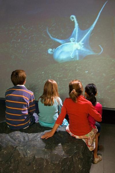 visiteurs regardant un extrait vidéo diffusé dans l'expo sur le calamar scintillant qui attire ses proies grâce aux photophores au bout de ses tentacules
