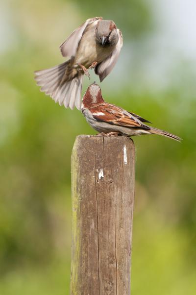 Deux oiseaux sur un pilier