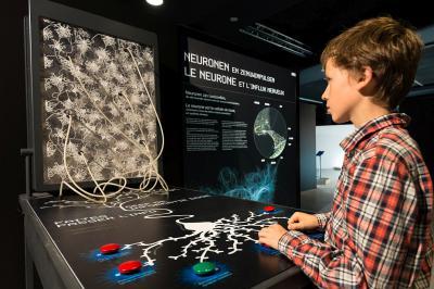 Een jongen speelt met een soort van flipperkast die toont hoe een zenuwstelsel werkt.